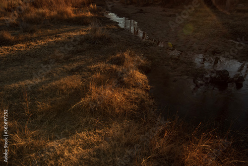 High Angle View Of Grass On Field By Lake Poster Mural XXL