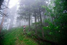 Fitt Hiking Girl In The Pine Forest