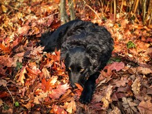 Sleepy Black Dog In The Forest