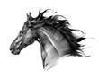 art side view monochrome isolated portrait of animal horse