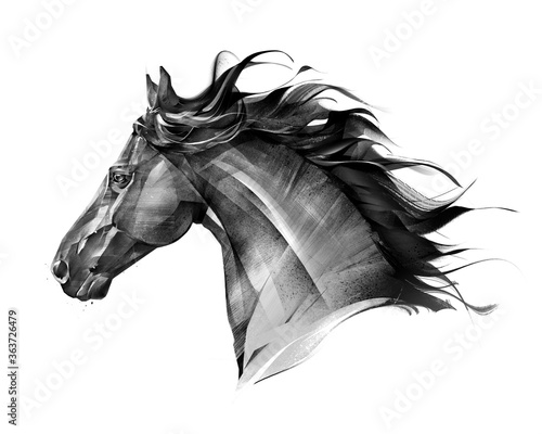art side view monochrome isolated portrait of animal horse Wallpaper Mural