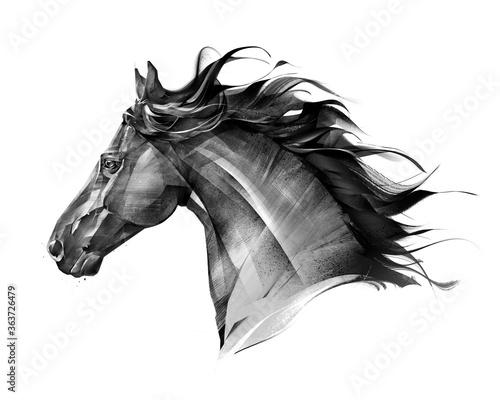 Fototapeta art side view monochrome isolated portrait of animal horse obraz