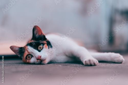 Fotografia Portrait Of Cat Lying Down