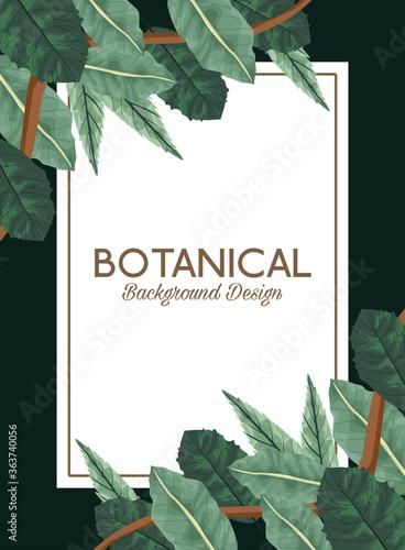Fototapeta tropical leafs in square frame and lettering botanical background design obraz