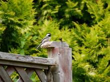 Bird On Fencepost