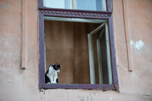 Cat On Window Of A Building