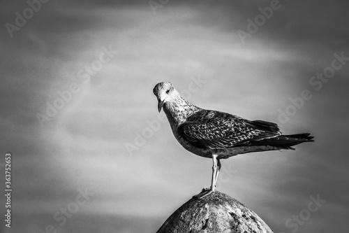 Close-up Of Seagull Perching On Rock Fototapeta