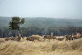 Herd of deer in rural at New Zealand .