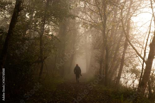 Fototapeta Rear View Of Man Walking In Forest During Foggy Weather obraz na płótnie