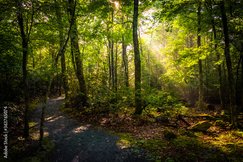 Canvas Print Scenic View Of Forest