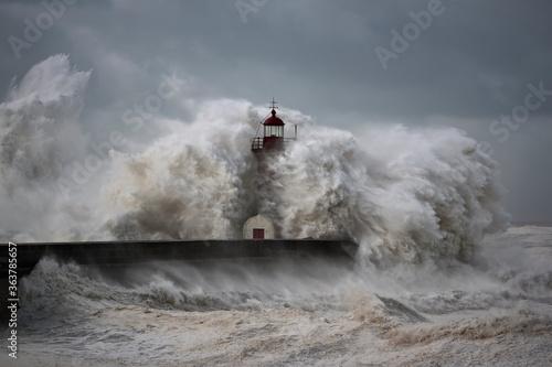 Fototapety, obrazy: Windy Coast