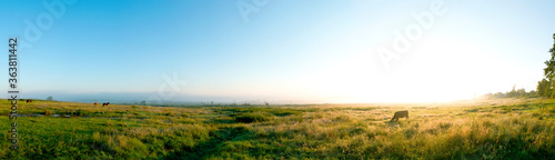 Obraz Wonderful panorama of the mountains. Horses on a mountain meadow. Summer panorama landscape in the mountains. Ukraine, Carpathians. Beautiful nature villages. Picture of wildlife - fototapety do salonu