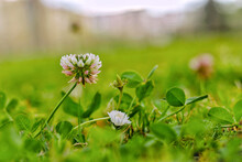 Close-up Of Flowering Plant On...