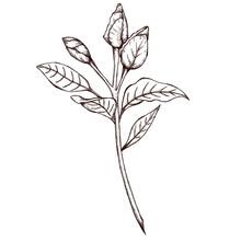 Vintage Style Gardenia Buds Gr...