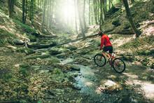 Mountain Bike Cyclist Woman Ri...