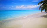 Fototapeta Kuchnia - Tropical Maldives beach with coconut palm trees and blue sky.