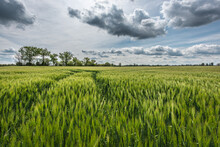 Scenic View Of Agricultural Fi...