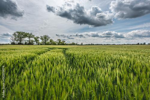 Fototapeta Scenic View Of Agricultural Field Against Sky obraz