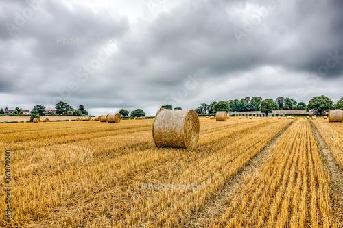 Fototapeta Hay Bales On Field Against Sky