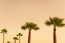Bottom View Of Tall Palm Trees And Plane On Tropical Beach. Background, Copy Space, Travel, Summer Concept.