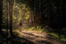 Man Walking On A Forest Road Towards The Evening Sun