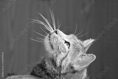 Obraz na płótnie Close-up Of Cat