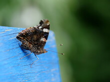 Close-up Of Red Admiral Butterfly