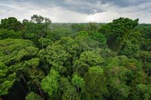 Peruvian Amazon Rainforest In Tambopata National Reserve