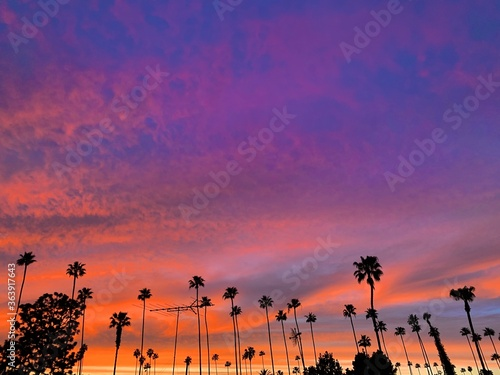 Low Angle View Of Silhouette Palm Trees Against Dramatic Sky Canvas Print