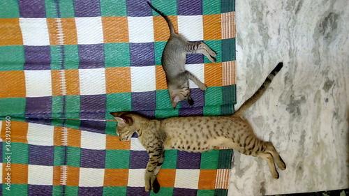 Photo Cats Sleeping On Carpet