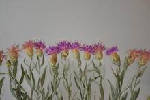 Small Thistles With Purple Flo...