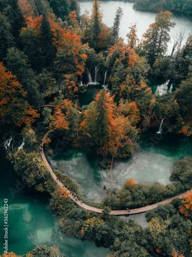 Okleiny na drzwi - Lasy - Drzewa  lake-in-the-forest