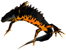 Great Crested Newt Low Poly Ve...