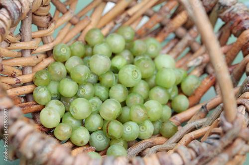 Fototapeta Mutation, White Blueberries