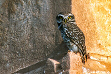 Beautiful Owl Sitting At Rooft...