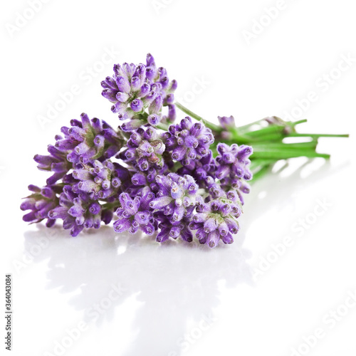 Obraz Bouquet of lavender flowers isolated on a white background. - fototapety do salonu