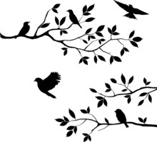 Silhouette Black Tree Branches And Flying Birds Design Background