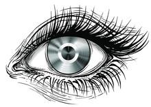 Isolated Vector Illustration Of Realistic Human Eye Of A Platinum Vinyl Iris.