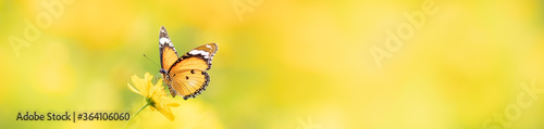Obraz na plátně Nature of butterfly in garden using as background butterflies day cover page