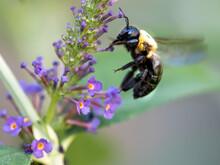 Black And Yellow Bumblebee Pol...