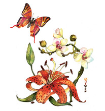 Watercolor Set Red Butterfly With Lily And Orchid