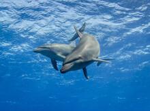 Free Dolphins Underwater