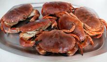 Cromer  Crabs, Freshly Cooked ...