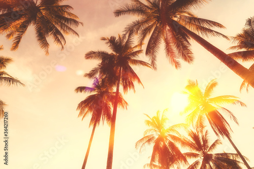 Copy space of tropical palm tree with sun light on sky background Canvas Print