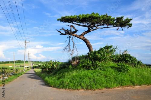 Fotografering 小浜島の風景 Scenery of a remote island in Okinawa