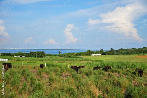 小浜島の風景 Scenery of a remote island in Okinawa Lerretsbilde