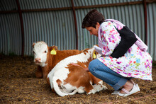 A Woman Is Petting Some Cows