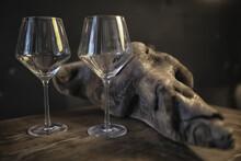 Concept Alcohol Glass / Beauti...