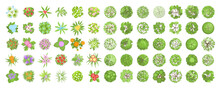 Vector Set. Trees And Flowers. Top View. Different Plants And Trees Vector Set For Architectural Or Landscape Design. (View From Above) Nature Green Spaces.