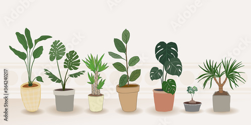 Indoor plants vector, Hand drawing style on wooden shelf, Vector set green plant in the pot Fotobehang